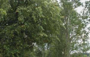 Koubalova Lhota. Pomník Vladimíru Mandíkovi