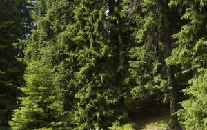 Kvilda-Františkov. Pomník českým a německým převaděčům přes státní hranici