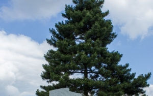 Hroznatín. Pomník Ludvíku Svobodovi