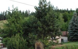 Vlčková. Pomník 17. listopadu 1989
